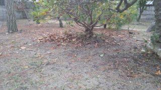 落ち葉清掃