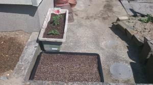 アスター、アクレギア、ダリア、グラジオスなど花壇に花を植えました♪